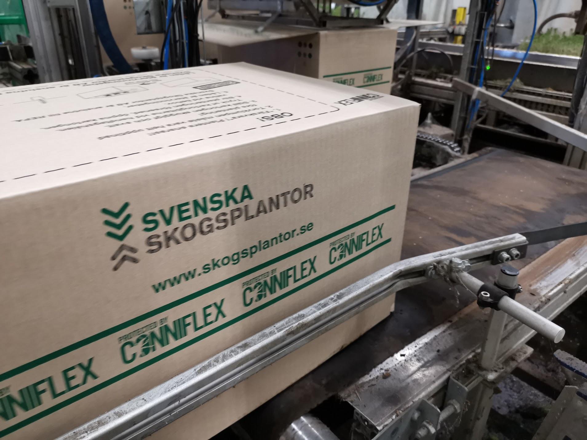 låda Svenska Skogsplantor